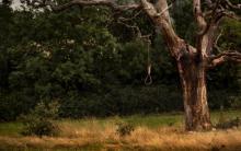 árbol con una soga